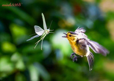 Birds - Flying Meal